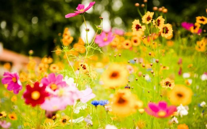 Prvaši o cvijeću