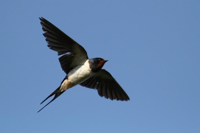 Odletjeti poput lastavice