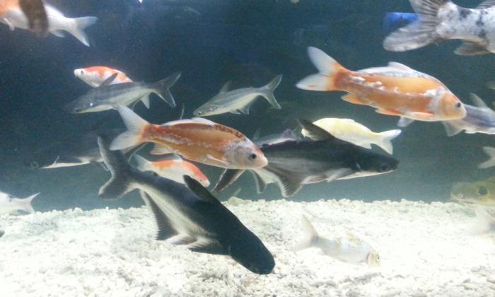 Posjet Aquariumu Split