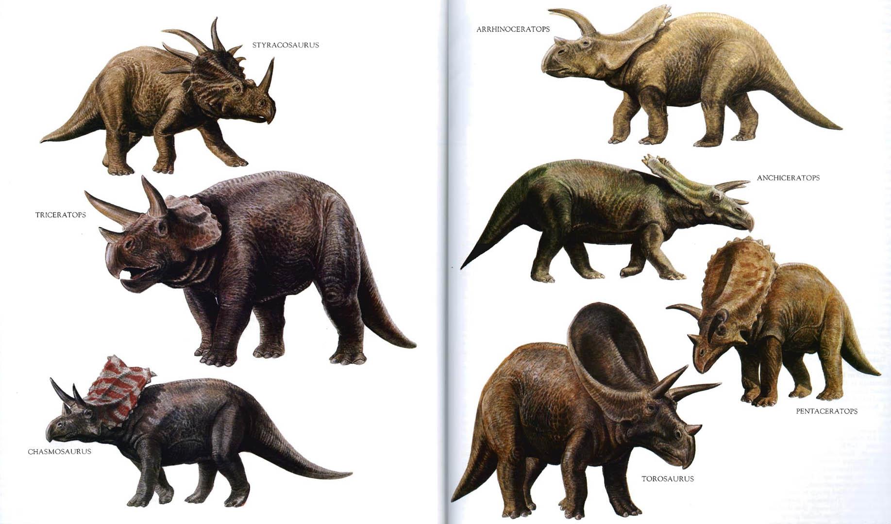 horned-dinosaurs-2