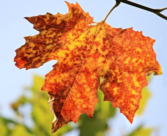 Kasna jesen